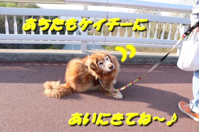 防災公園桜の広場 004