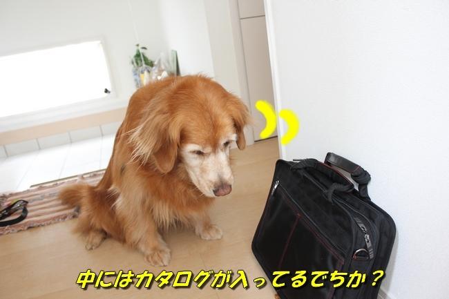 鞄玄関 026