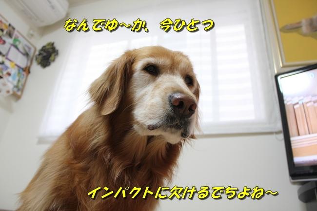 ひよこちゃん表情 026