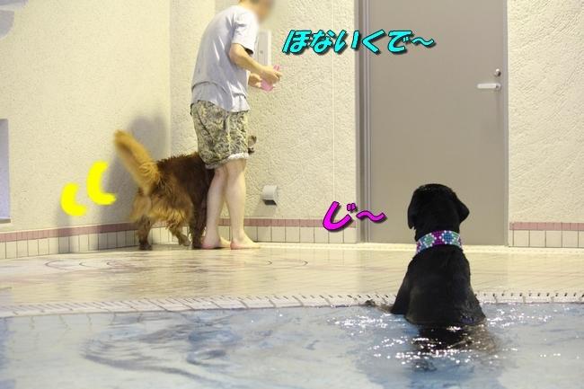 和栗ちゃんプール 123