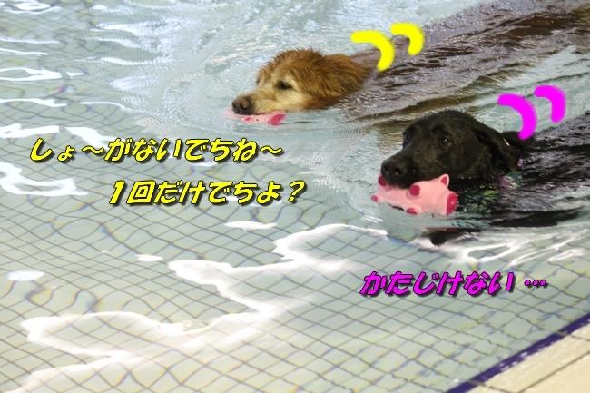 和栗ちゃんプール 198