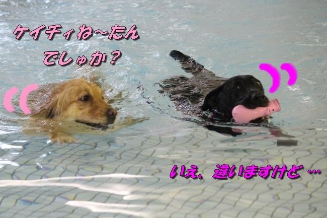 和栗ちゃんプール 075