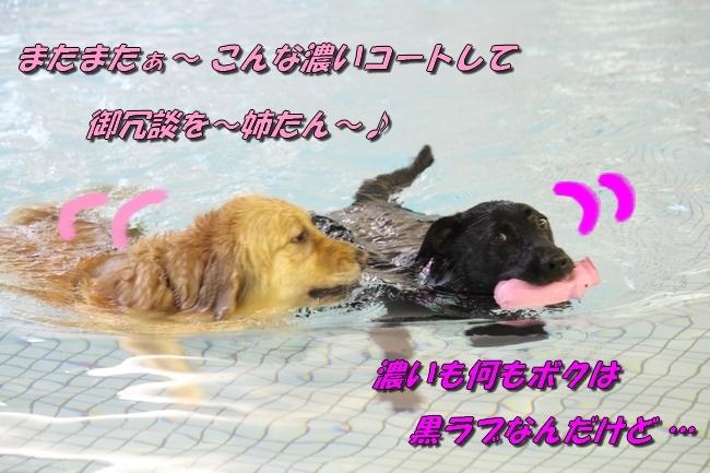 和栗ちゃんプール 076