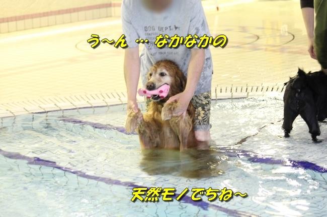 和栗ちゃんプール 099