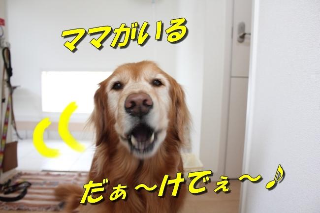 201805081452231ed.jpg