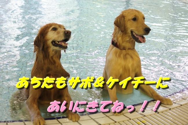 さぼちゃんとお兄ちゃん 082