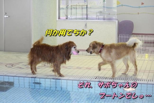 さぼちゃんとお兄ちゃん 133