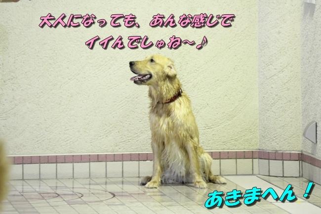 さぼちゃんとお兄ちゃん 059