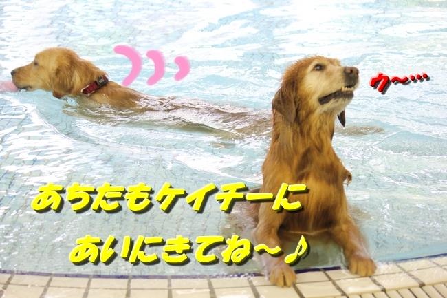 さぼちゃんとお兄ちゃん 084