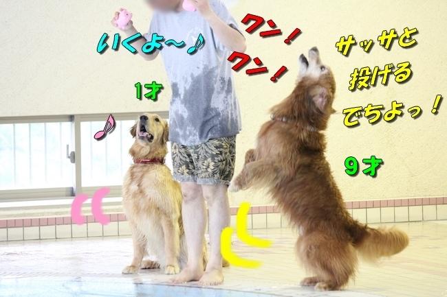 さぼちゃんとお兄ちゃん 157