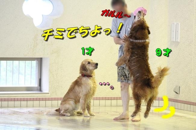 さぼちゃんとお兄ちゃん 181