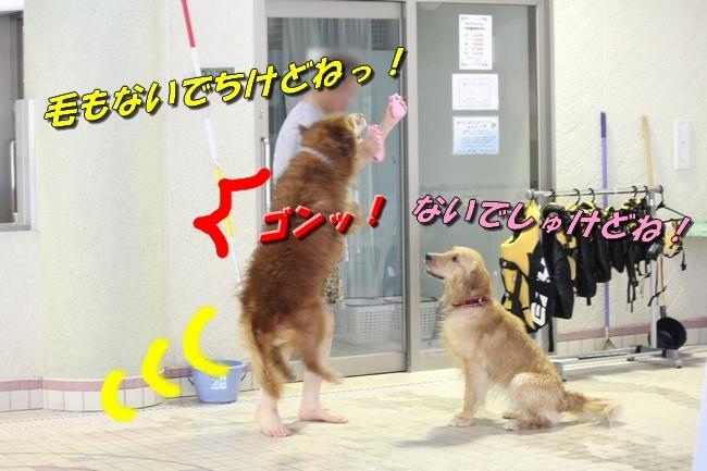 さぼちゃんとお兄ちゃん 145
