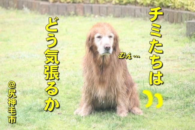 さぼちゃんとお兄ちゃん 114