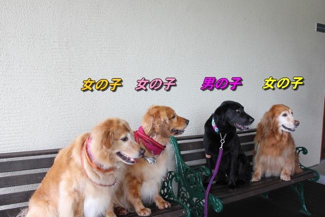 さくらちゃんこなつちゃん仁君 449