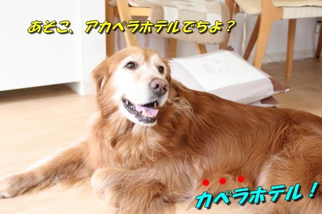 パン新聞会談 042