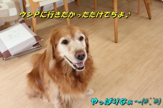 パン新聞会談 058