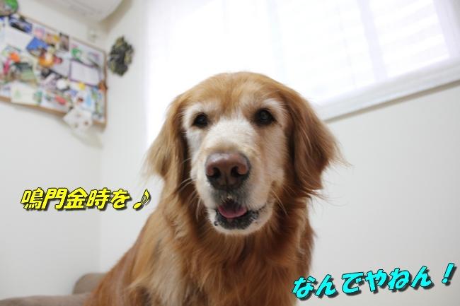 ひよこちゃん表情 009