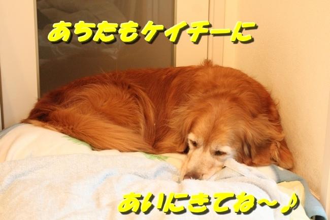カーリング安眠 001