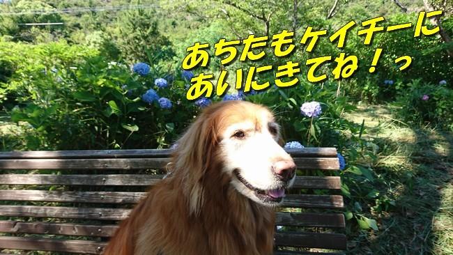 DSC_0098.jpg