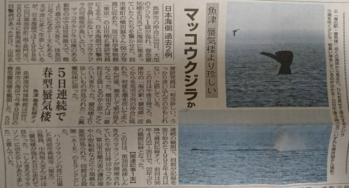 北日本新聞1524445973724