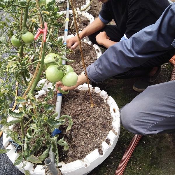 IMG_20180509_tomato_hachi.jpg