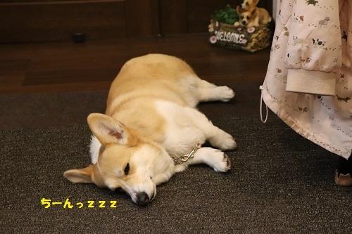 陽菜ちゃんも寝た