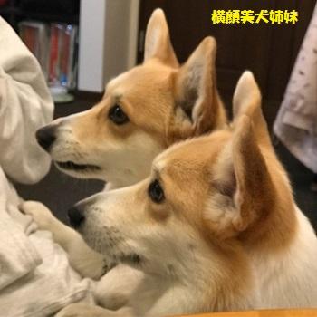 横顔美犬たち