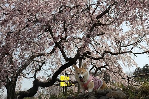 春はねむい