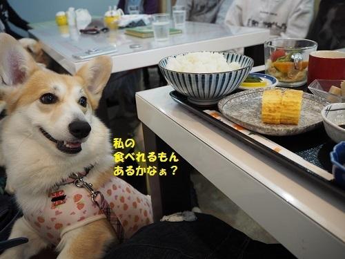 私の食べるんあるかな