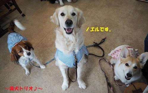 美犬トリオ