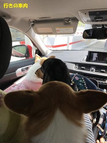 いきしの車内
