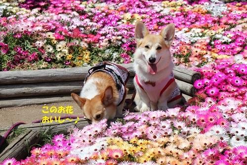 お花おいしー