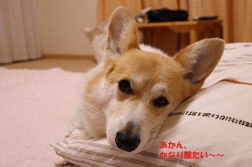 かなり眠たい