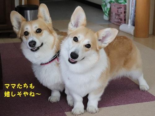 かわいぃ姉妹