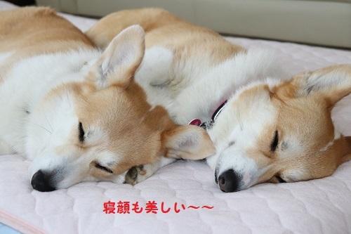寝顔もきれい