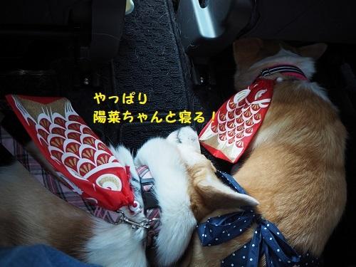 陽菜ちゃんと寝る~