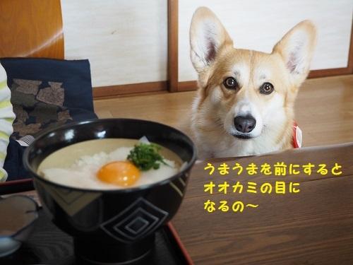 オオカミ陽菜ちゃん