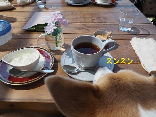 紅茶とおでざ