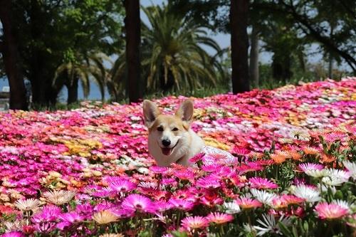 お花からにょき