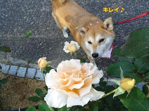 3花もキレイ