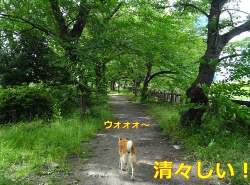 5新緑の名中でお散歩