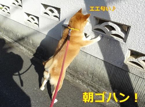 4突撃朝ゴハン