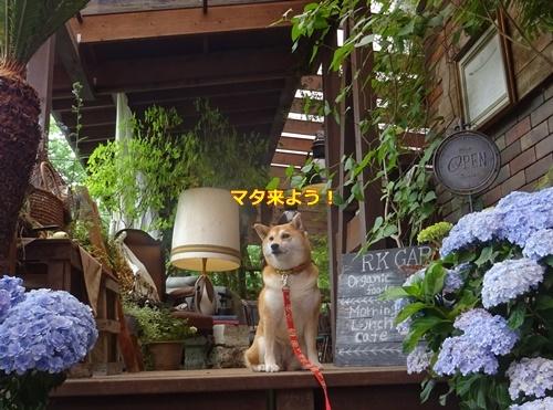 5RKカフェ