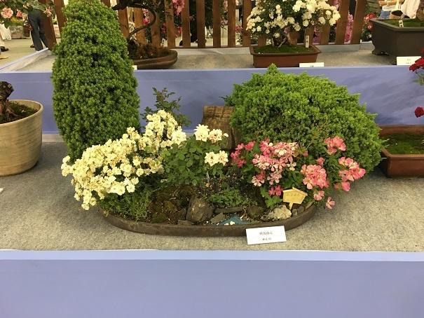 20180518_71_バラの盆栽コーナー