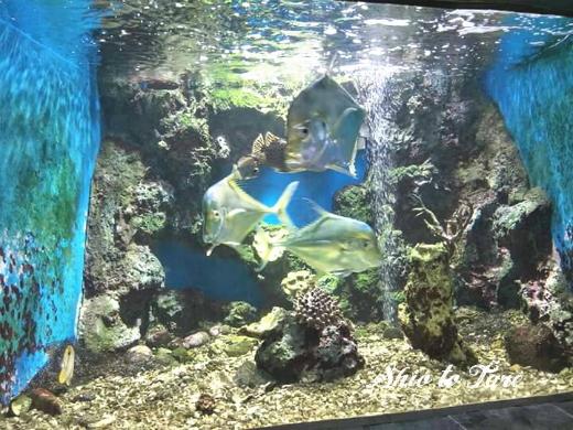 1523749564897_20180415_01_chanthaburi aquarium