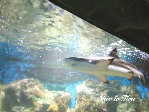 1523749570832_20180415_01_chanthaburi aquarium