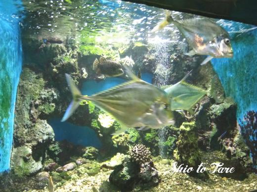 1523749574484_20180415_01_chanthaburi aquarium
