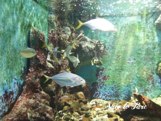1523749576254_20180415_01_chanthaburi aquarium
