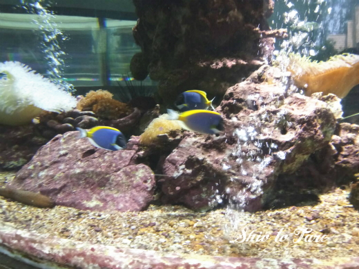 1523749578144_20180415_01_chanthaburi aquarium