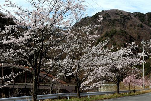 20180407荒川ダムの桜 (1)